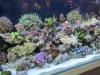 fluval-led-striplight-4