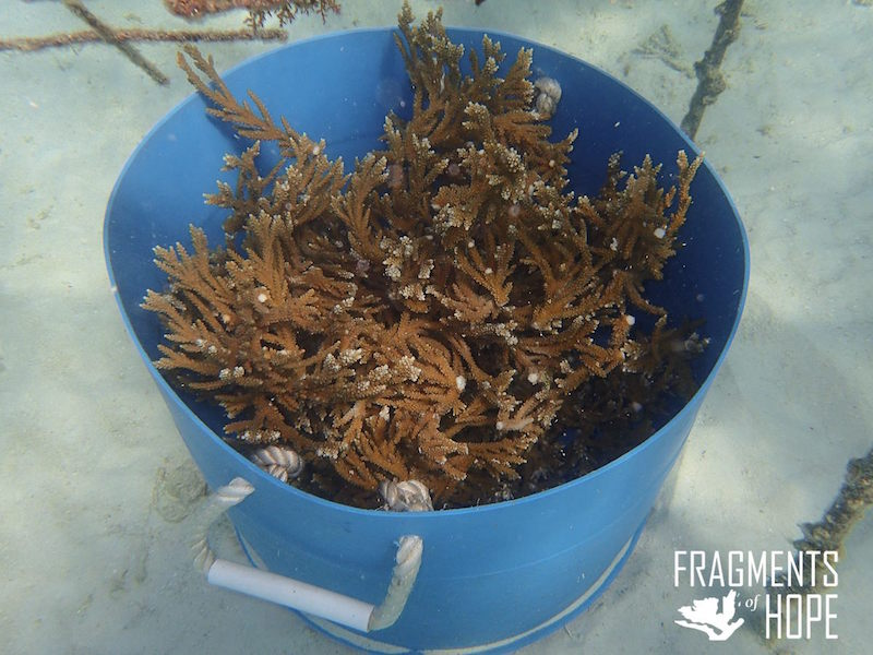 Fragments of Hope Corals Nursery