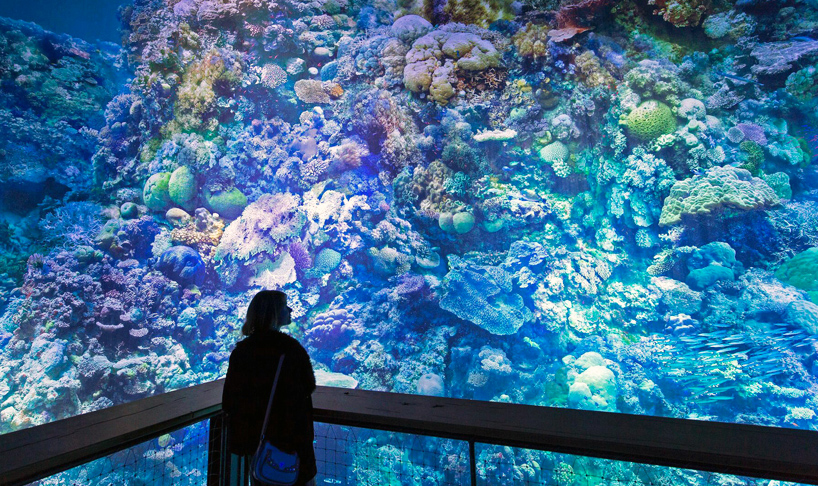 great-barrier-reef-panometer-leipzig-designboom-03