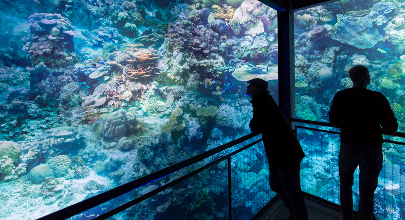 great-barrier-reef-panometer-leipzig-designboom-04