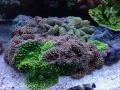 dsr-reef-glen-fong-4