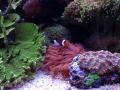dsr-reef-glen-fong-5
