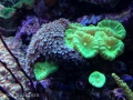 dsr-reef-glen-fong-7