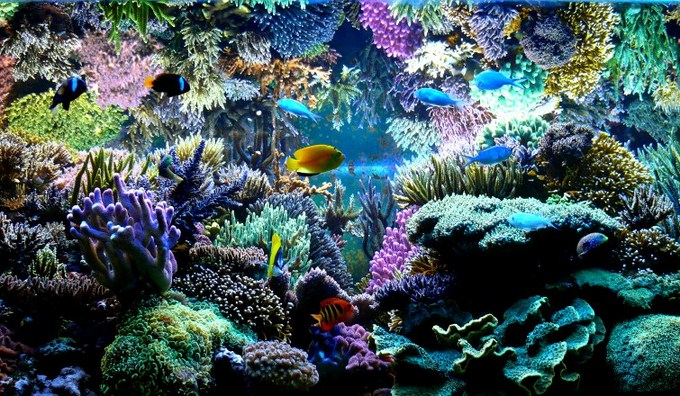 Aquarium Reef : are aquariums that look fantastic and stunning and then there are reef ...