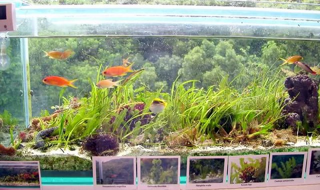 Halophila S Seagrass Tank Is A Prime Example Of Simple Beauty
