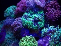 hammer-coral-cube-2