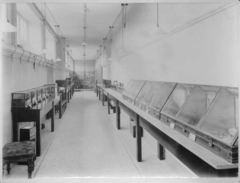 Horniman first aquarium circa 1905.