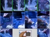 collage_nano_reef
