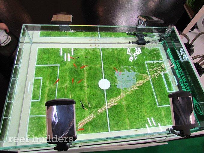 football aquarium