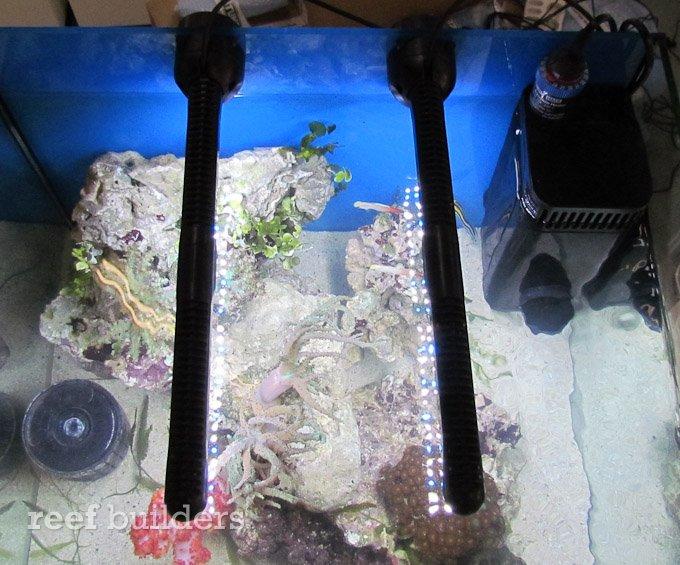 tunze LED