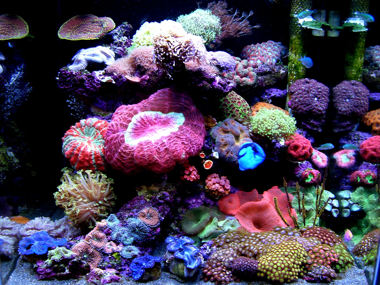 J Field Yeo S Cube From Singapore Is A Cute Collection Of Corals Reef Builders The Reef And