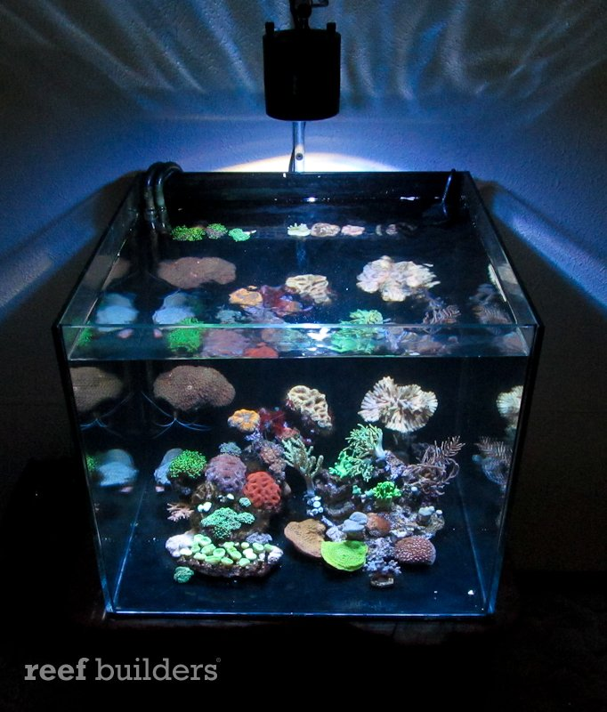 Kessil A350 Review Just About The Best Stand Alone Led