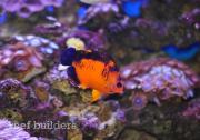 coral-beauty-nov-16-2011