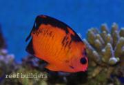 coral-beauty-nov-6-2011-1