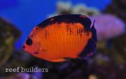 coral-beauty-nov-6-2011