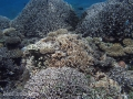 Corals of Kwajalein Atoll