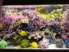 lionel-reef-france-12