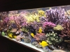 lionel-reef-france-5