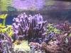 lionel-reef-france-7