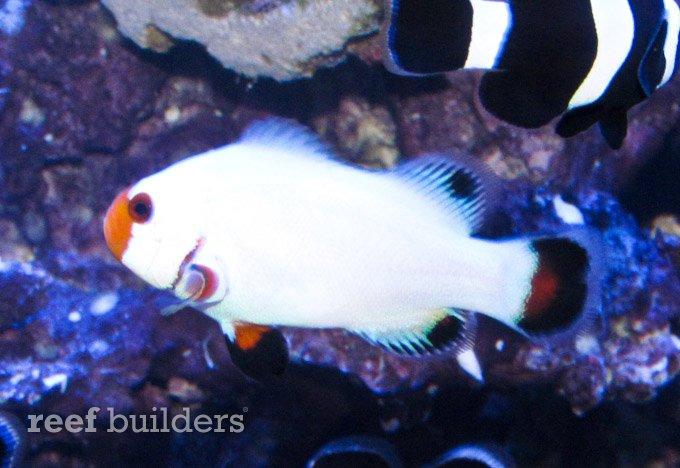 sustainable aquatics wyoming white