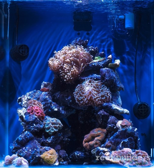 Mame Nano Overflow Review Reef Builders The Reef And