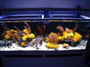 mariusz-sun-coral-reef-1