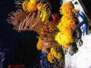 mariusz-sun-coral-reef-10