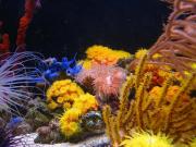 mariusz-sun-coral-reef-2