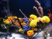mariusz-sun-coral-reef-3