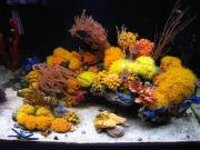 mariusz-sun-coral-reef-6