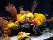 mariusz-sun-coral-reef-8