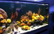 mariusz-sun-coral-reef-9