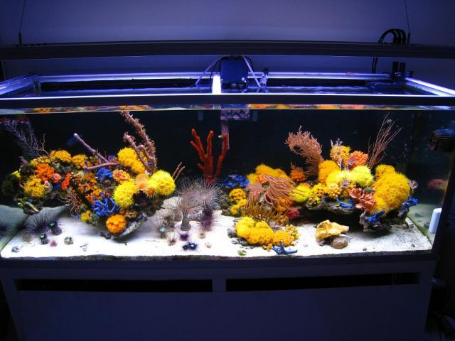 Reef Aquascaping Why Hasn T The Movement Really Caught On Yet Reef Builders The Reef And