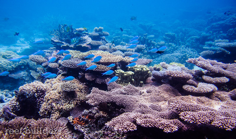 Breathtaking Views Of Coral Reefs At Kwajalein Atoll