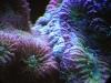 mesoscope-coral-macros-2