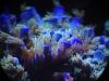 mesoscope-coral-macros-4
