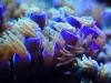 mesoscope-coral-macros-5