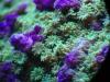 mesoscope-coral-macros-7