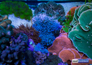 mountain-view-reef-tank-7