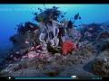 ocean-nature-aquariums-dvd-2