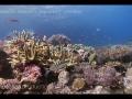 ocean-nature-aquariums-dvd-3