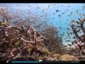 ocean-nature-aquariums-dvd-4