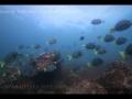 ocean-nature-aquariums-dvd