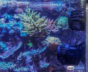 neptune systems wav pump 1link-17