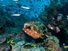 coral-sea-marine-preserve-reef-life_44388_600x450