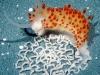 new-sea-slug-discovered-egg-doily