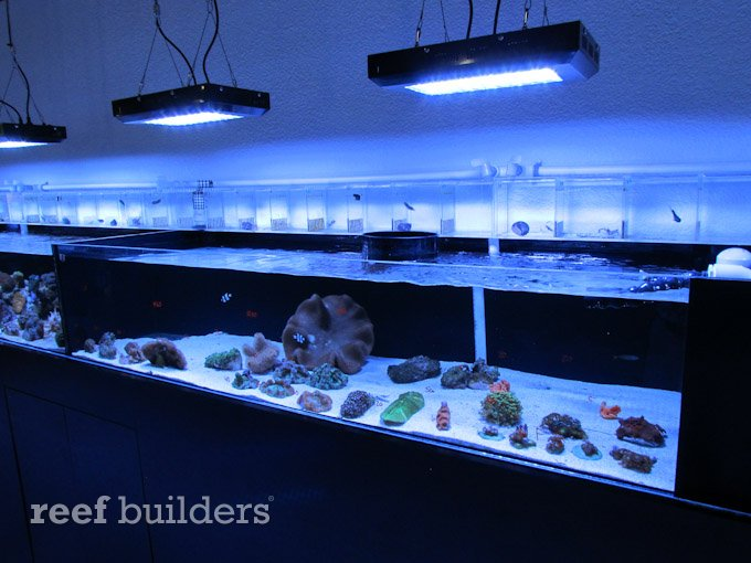 Rss ocean view aquariums is an exemplary new fish store for Fish store miami