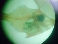 filefish 2