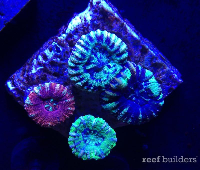 ovision-aquarium-coral-pictures-11