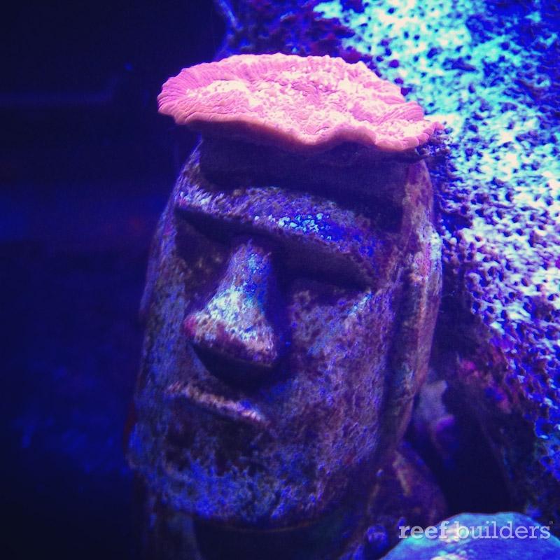 ovision-aquarium-coral-pictures-13